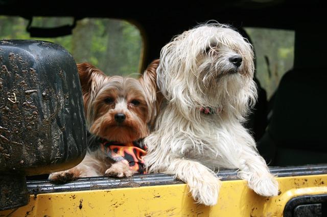 cane-trasportini-in-viaggio
