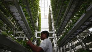 Guida alla coltivazione indoor di piante autofiorenti