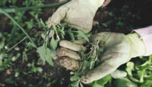 piante coltivare casa