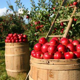 Censimento Agricoltura Istat 2021, come funziona e come partecipare